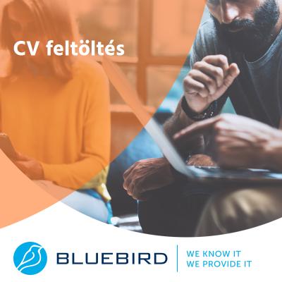 CV feltöltés - Bluebird